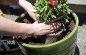 Met behulp van de Aqua Globes voor waterplanten