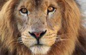 Lessen over herbivoren en carnivoren voor eerste-klassers