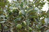 Apple Tree Care & spuiten