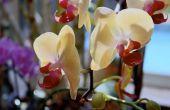 How to Kill mijten van een orchidee