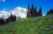 Hoe Wild Mountain bramen plukken in Washington