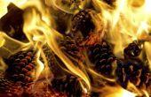 Hoe maak je een Pine Cone Fire Starter
