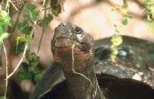 Welke bloemen kan ik planten in mijn tuin voor mijn schildpad?