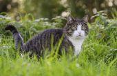 Wat kan een mannelijke kat worden Contol verliezen van zijn darmen?