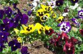 Waarom zijn verschillende kleuren van de bloemen?