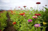 Factoren die invloed hebben op de ademhaling in planten
