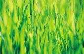 De beste graszaad voor warme volle zon