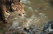 Dieren die carnivoren in het tropisch regenwoud zijn