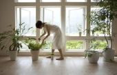 Hoe om te groeien van een paraplu-boom van een stek
