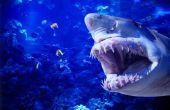 Hoe word ik een dierenarts Tech voor zeedieren