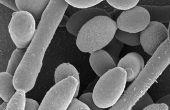 Genezing van Candida anale jeuk