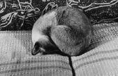 Waarom katten hun gezicht bedekken wanneer ze slapen?