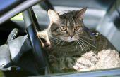 Acepromazine dosering voor katten
