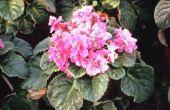 Potgrond voor een Afrikaanse Violet inzetbaar voor andere planten?