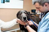 Canine vaatziekten
