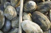 Hoe schoon Clam & oesterschelpen gevonden op een strand