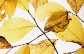 Hoe te identificeren bloemen & planten door hun bladeren