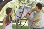 Wat zijn de oorzaken van haaruitval paard?