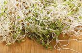 Hoe schoon Alfalfa spruiten