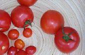 How to Grow Hydroponic Groenten