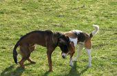 Kunnen honden vangen gist & bacteriële infecties van een andere hond?