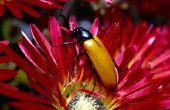 Welk insekt bijt oorzaak blaren?