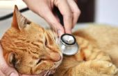 Mogelijke oorzaken van piepende ademhaling bij katten