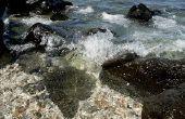 Hoe verzamelt Shells van Hawaii stranden