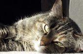 Gedrag van de oudere kat