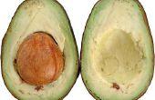 Waarom zet avocado's Red?