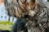 Verlichting voor de uitslag van een hond