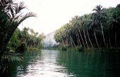 Uitgestorven dieren in het Amazoneregenwoud