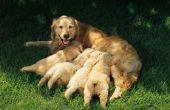 Moeten verzorging honden pauzes nemen?