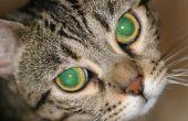 Kat niezen en Eye Running