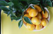 How to Grow een Clementine boom in je huis