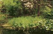 Milieu-overwegingen voor tuinieren met inheemse planten