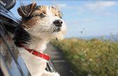 Hoe om te reizen naar Canada met de auto met een hond