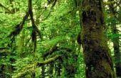 De nadelen van het leven in het tropisch regenwoud