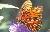 How to Make insecten met pijp reinigingsmiddelen
