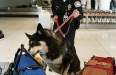 Het salaris van een professionele hondengeleider