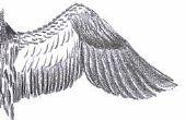 Hoe teken je een Bird's Wing
