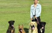 How to Run een succesvolle hond wandelen Business: de vijf belangrijkste ingrediënten