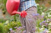 Soda, kan worden gebruikt om planten Water?
