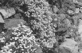 Hoe maak je een rotsige tuin