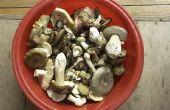 Hoe te herkennen van wilde paddestoelen in North Carolina