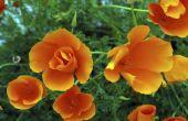 Bloemen die in de ochtend bloeien