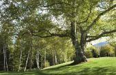 Namen van de fasen van groei van de boom