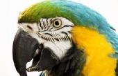 Wat Is de typische levensduur van een papegaai?