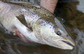 Welke aas te gebruiken voor het vissen op zalm