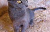 Itraconazol voor de behandeling voor Ringworms bij katten